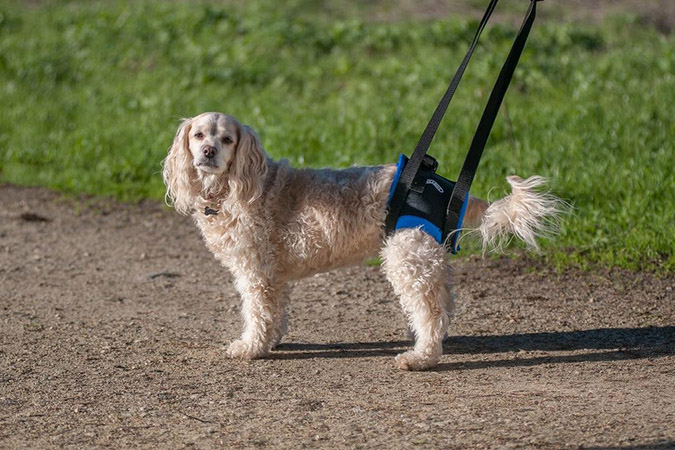 Walk About Harness