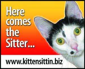 Kitten Sittin